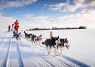 Dogsledding Near Sacacomie Lake
